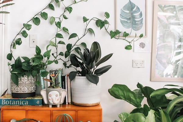 Inspiration And Ideas for urban indoor gardens and plants
