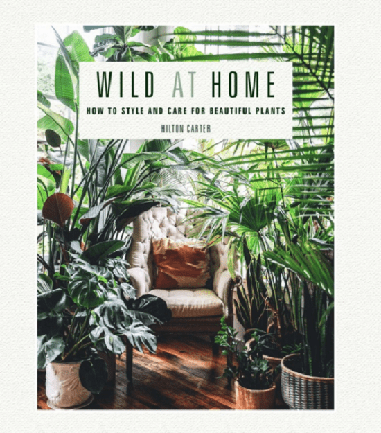Wild at Home How To Style And Care For Beautiful Plants